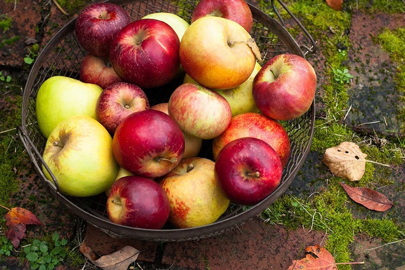 Dùng táo để tăng vòng 1